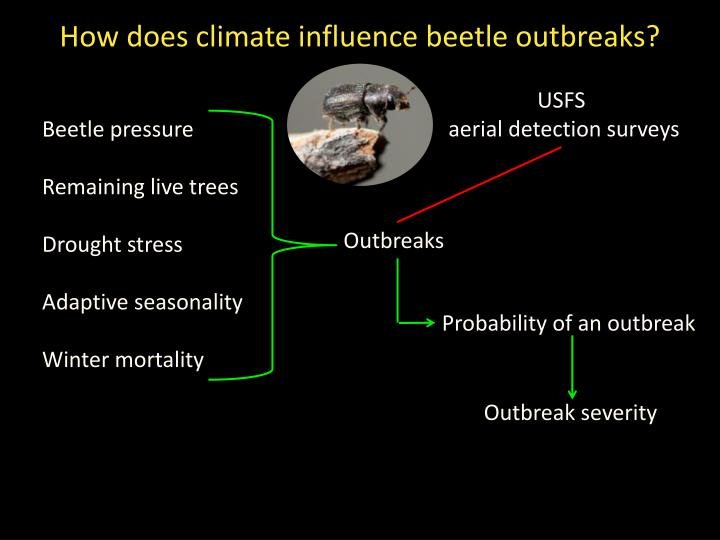 How does climate influence beetle outbreaks?