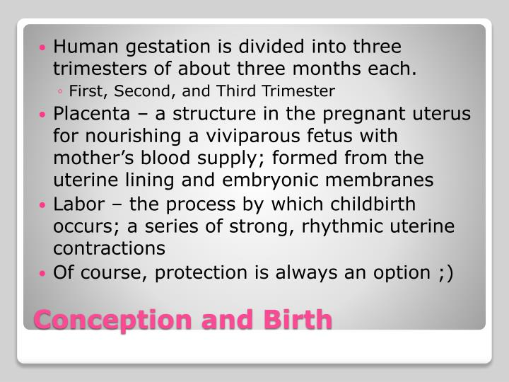 Human gestation is divided into three trimesters of about three months each.