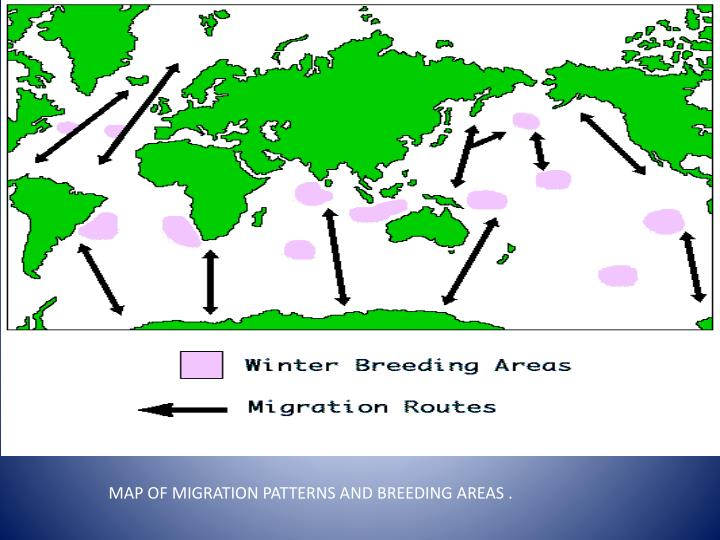 MAP OF MIGRATION PATTERNS AND BREEDING AREAS .