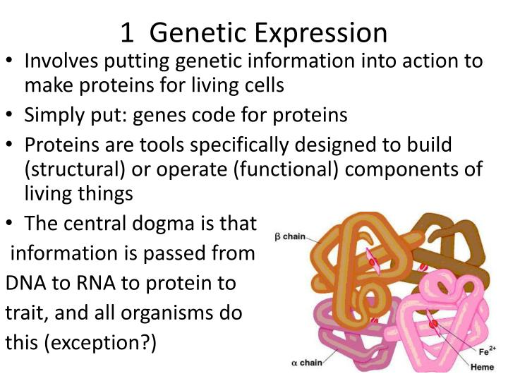 1  Genetic Expression