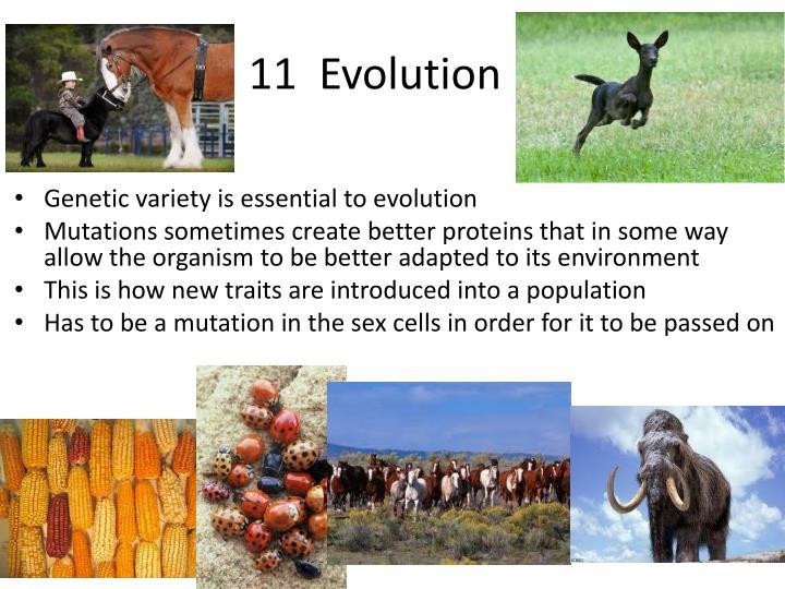 11  Evolution