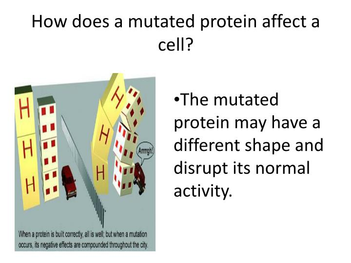 How does a mutated protein affect a cell?