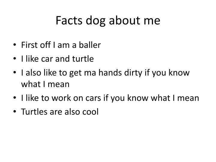Facts dog about me