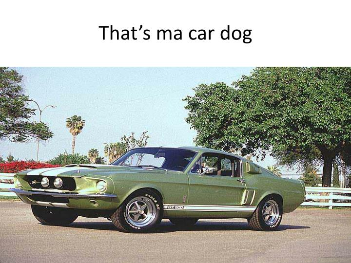 That's ma car dog