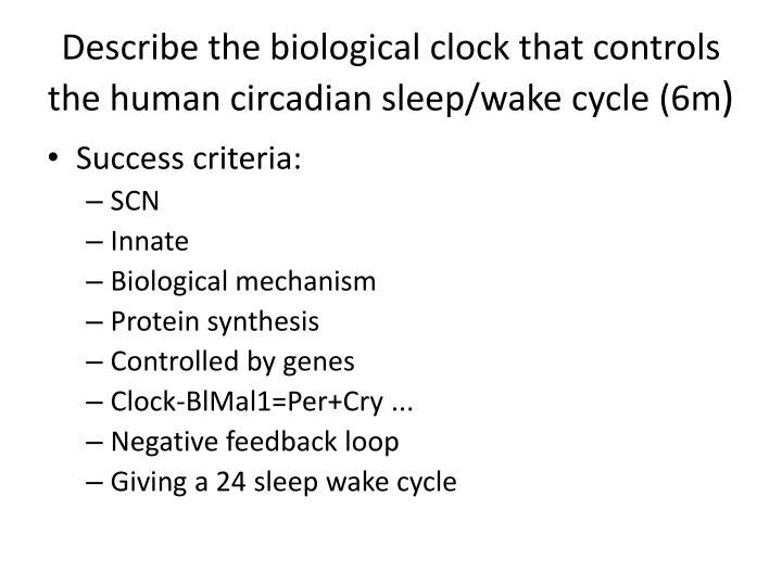 Describe the biological clock that controls the human circadian sleep/wake cycle (6m