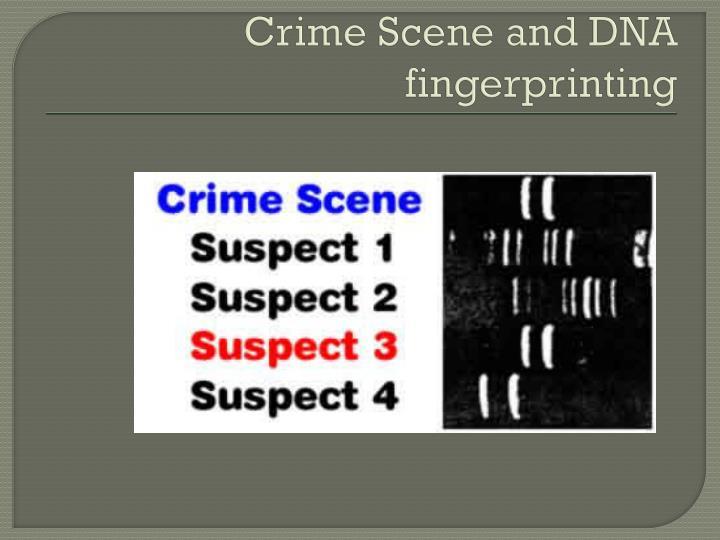 Crime Scene and DNA fingerprinting