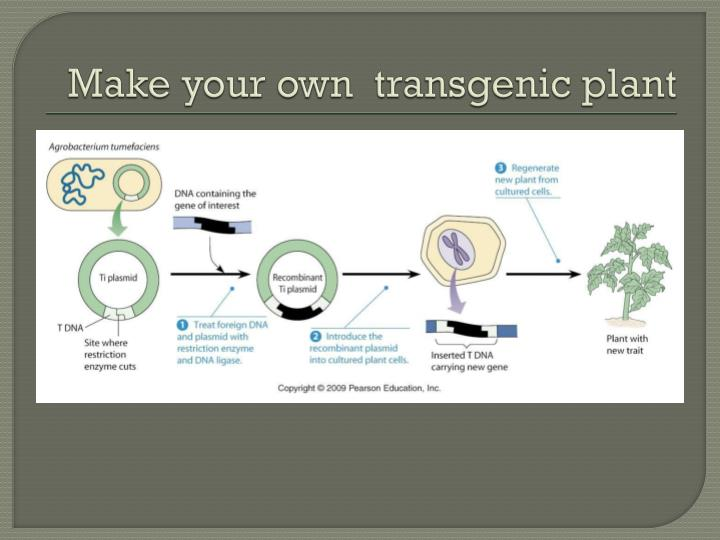 Make your own  transgenic plant