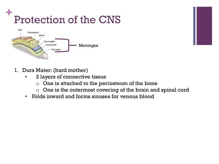 Protection of the CNS