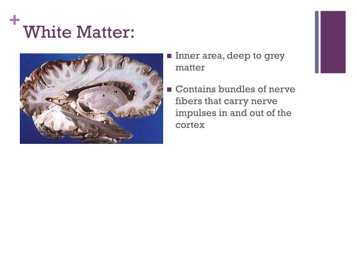 White Matter: