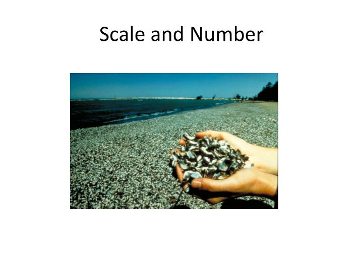 Scale and number