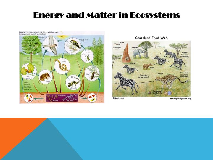 Energy and Matter in Ecosystems