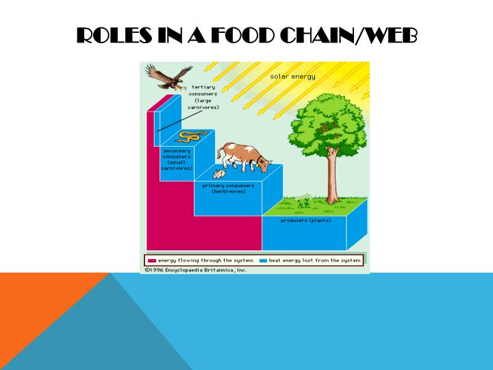 Roles in a food chain/web