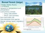 boreal forest taiga