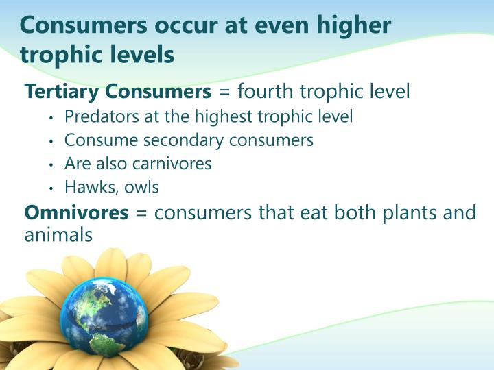 Consumers occur at even higher trophic levels