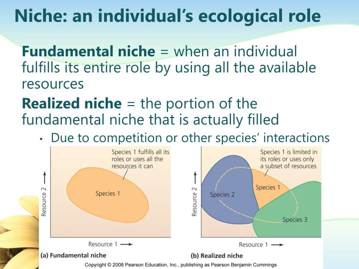 Niche: an individual's ecological role