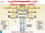 amplified fragment length polymorphism aflp