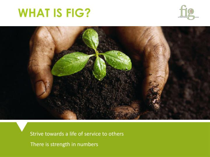 WHAT IS FIG?