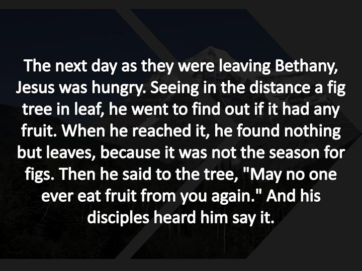 """The next day as they were leaving Bethany, Jesus was hungry. Seeing in the distance a fig tree in leaf, he went to find out if it had any fruit. When he reached it, he found nothing but leaves, because it was not the season for figs. Then he said to the tree, """"May no one ever eat fruit from you again."""" And his disciples heard him say it."""