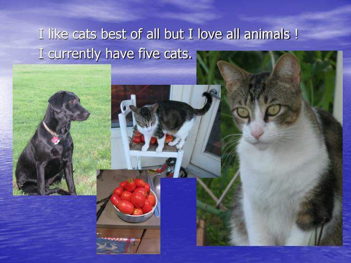 I like cats best of all but I love all animals
