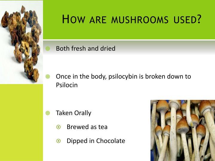 How are mushrooms used?