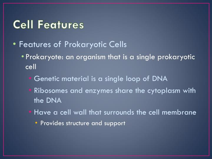 Cell Features