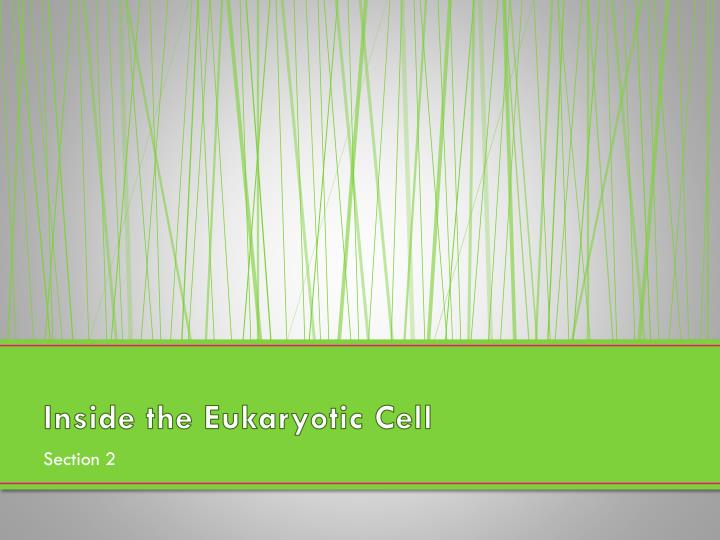 Inside the Eukaryotic Cell