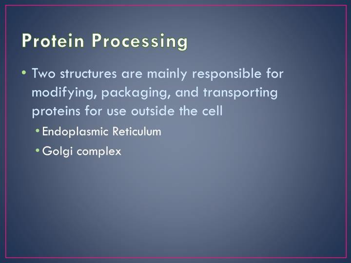 Protein Processing