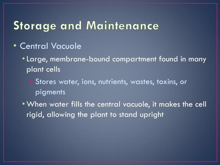 Storage and Maintenance