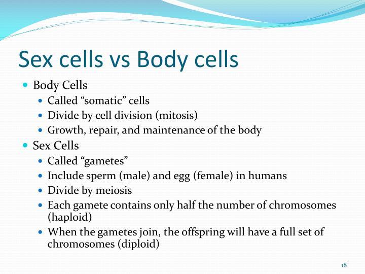 Sex cells vs Body cells