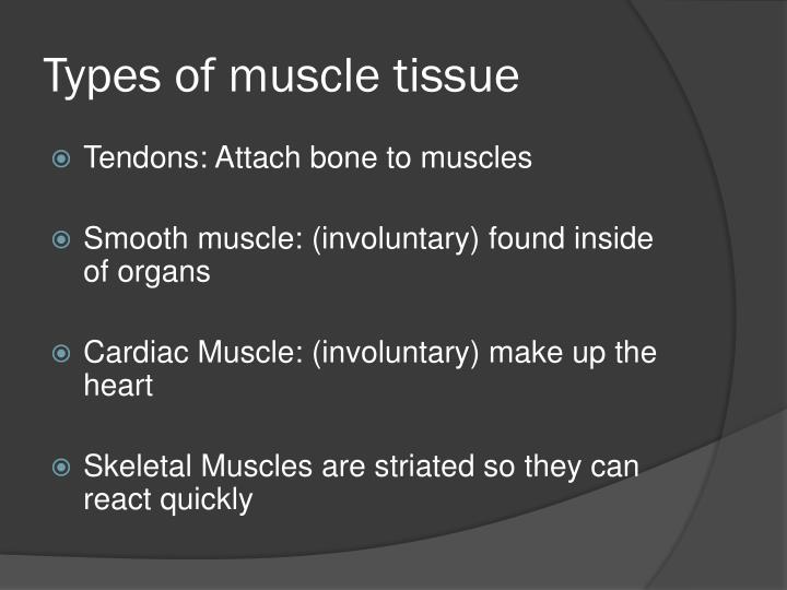 Types of muscle tissue
