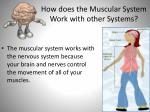 how does the muscular system work with other systems3