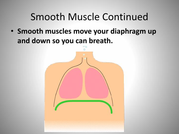 Smooth Muscle Continued