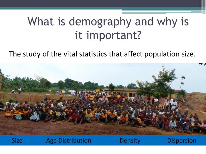 What is demography and why is it important?