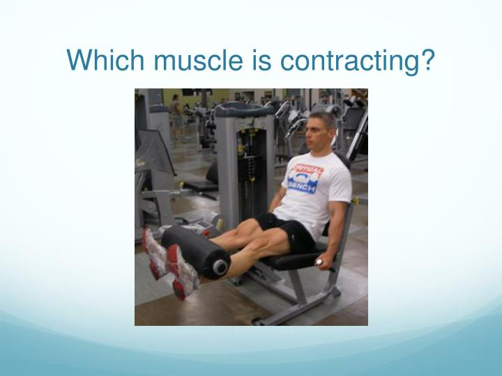 Which muscle is contracting?