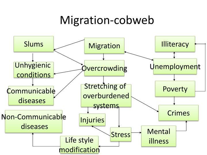 Migration-cobweb