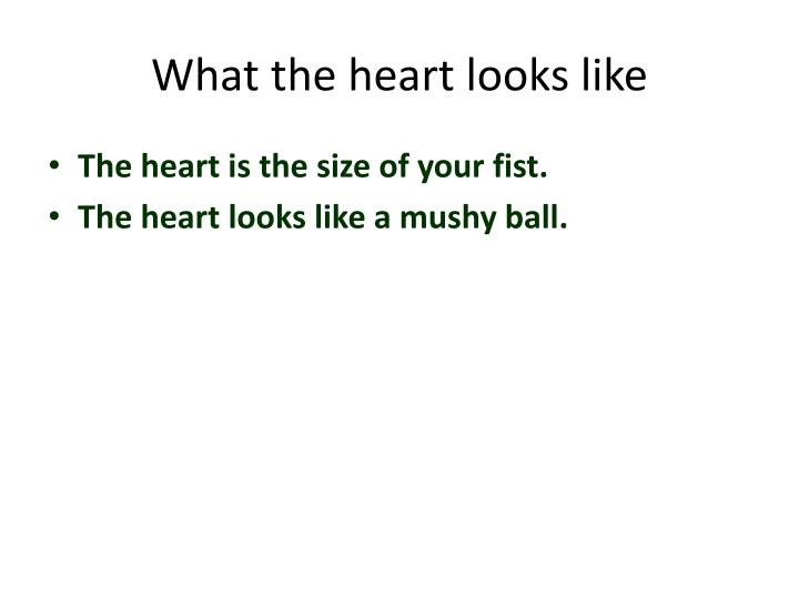 What the heart looks like