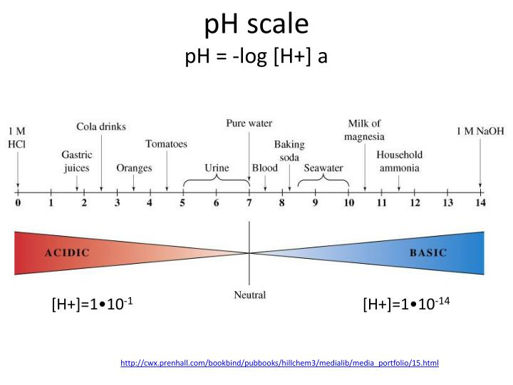 Ph scale ph log h a