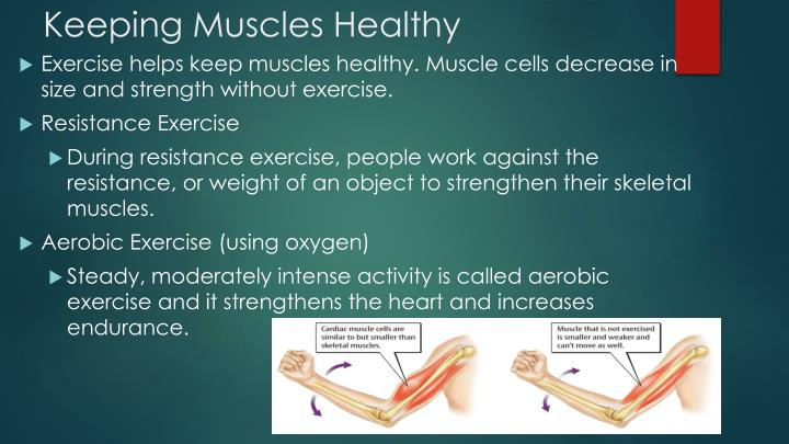 Keeping Muscles Healthy
