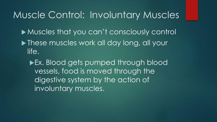 Muscle Control:  Involuntary Muscles