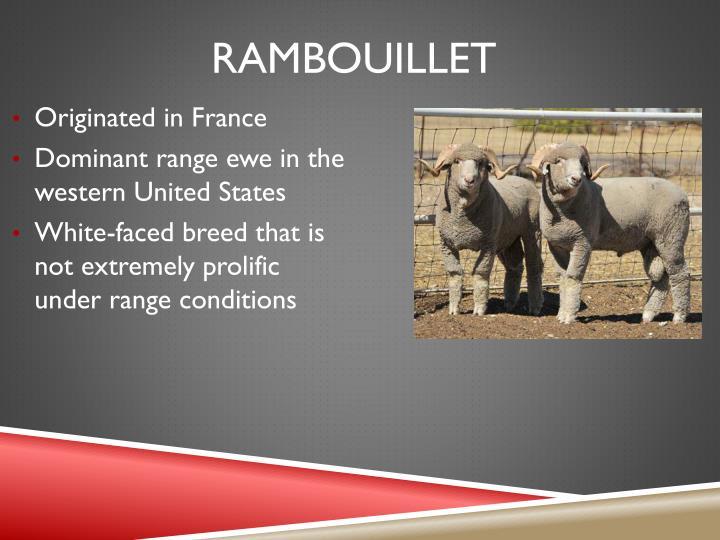 Rambouillet