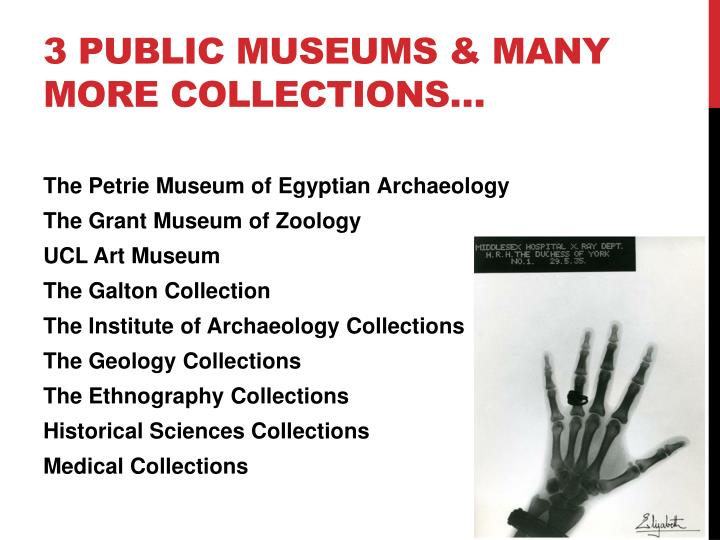 3 public museums & Many more collections…