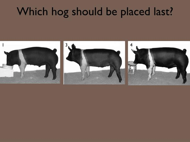 Which hog should be placed last?