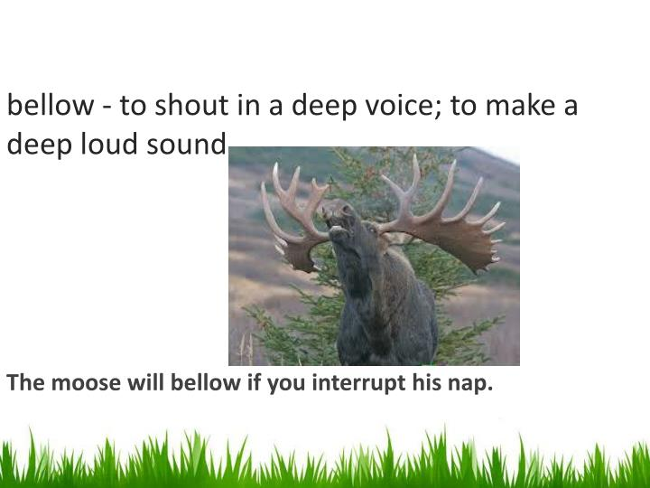 Bellow to shout in a deep voice to make a deep loud sound