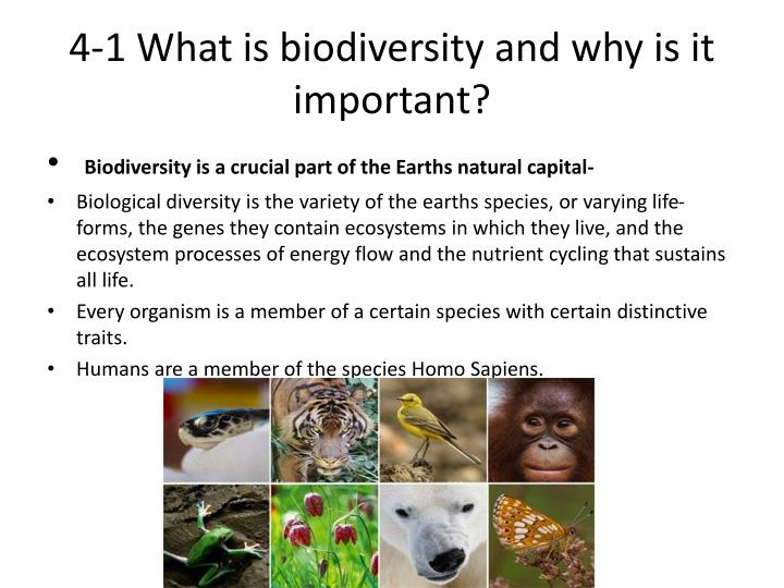 4 1 what is biodiversity and why is it important