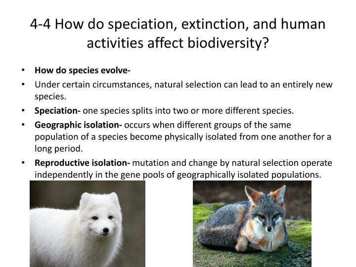 4-4 How do speciation, extinction, and human activities affect biodiversity?