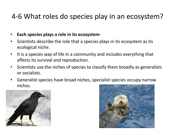 4-6 What roles do species play in an ecosystem?