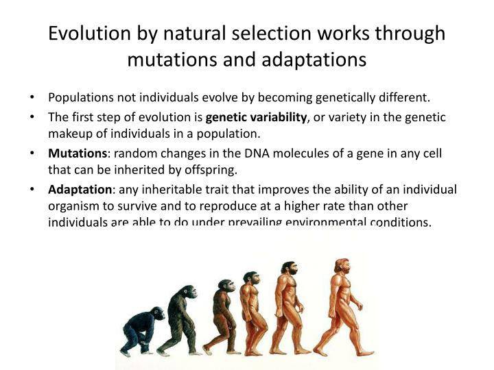 Evolution by natural selection works through mutations and adaptations