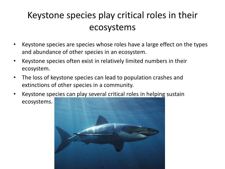 Keystone species play critical roles in their ecosystems
