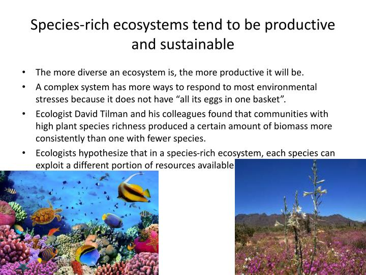 Species-rich ecosystems tend to be productive and sustainable