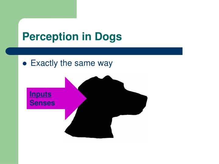 Perception in Dogs